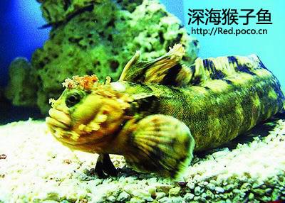 深海猴子鱼, 史前动物?