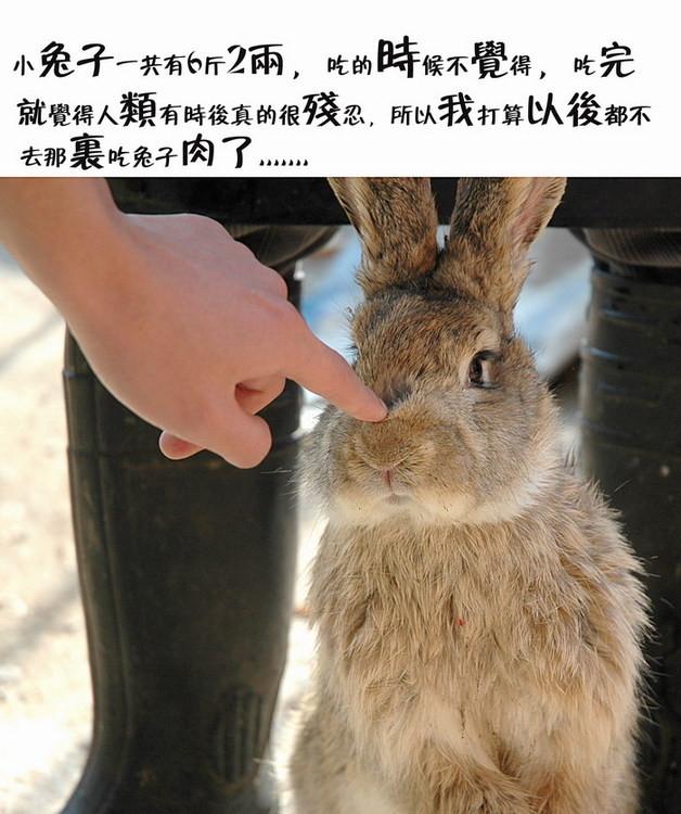 美味的小兔子