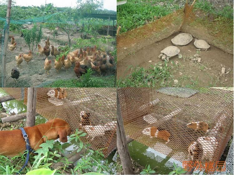 农庄里还饲养了几种小动物