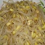 葱油炒黄豆芽