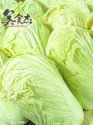 白菜根为浅根系,主根粗大,侧根发达,水平分布.