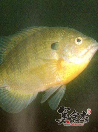 太阳鱼学名lepomis gibbosus ,属鲈形目-太阳鱼科的淡水鱼类