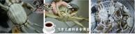 清蒸螃蟹JA.jpg