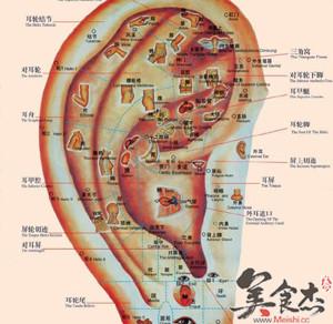 耳朵内部结构图