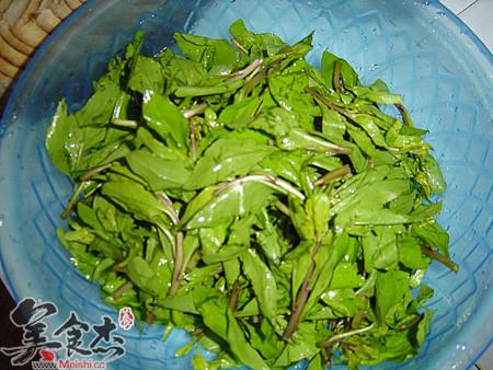 20种野菜辨别及推荐DIY菜品