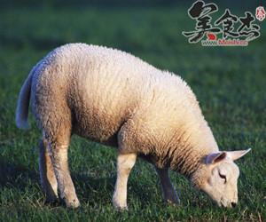 农村干部告诉你什么肉可以吃?zs.jpg