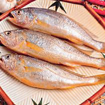 黄鱼(大黄花鱼)