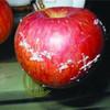 打蜡苹果染色橙子如何鉴别?