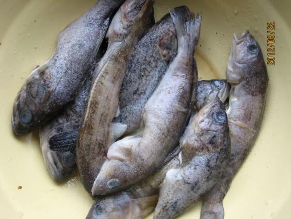 蒸海鱼的种类图片