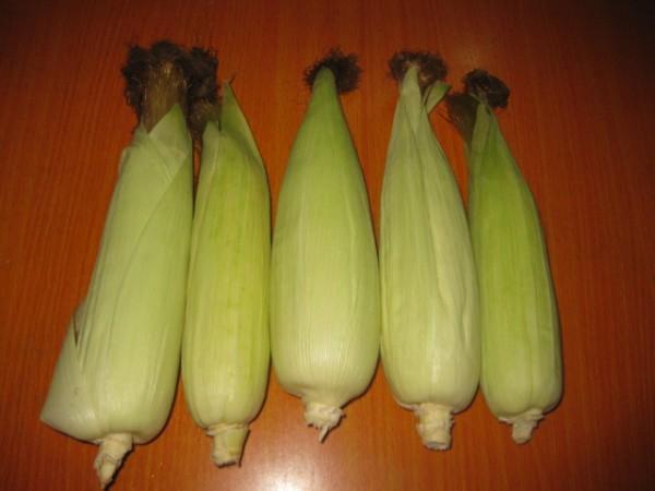 水果玉米xj.jpg