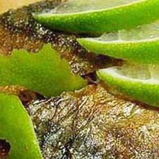 煮糟青鱼的做法
