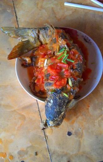 茄汁鲤鱼的做法【步骤图】_菜谱_美食杰