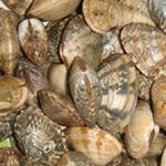 分享几个去蛤蜊泥沙的方法