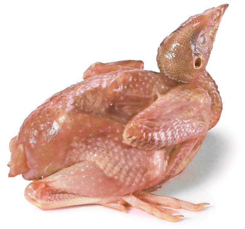 """鹌鹑为雉科动物。俗话说:要吃飞禽,鸽子鹌鹑。鹌鹑肉、蛋,味道鲜美,营养丰富。 鹌鹑又简称鹑,是一种头小、尾巴短、不善飞的赤褐色小鸟,鹌鹑肉是典型的高蛋白、低脂肪、低胆固醇食物,特别适合中老年人以及高血压、肥胖症患者食用。鹌鹑可与补药之王人参相媲美,誉为""""动物人参""""。"""