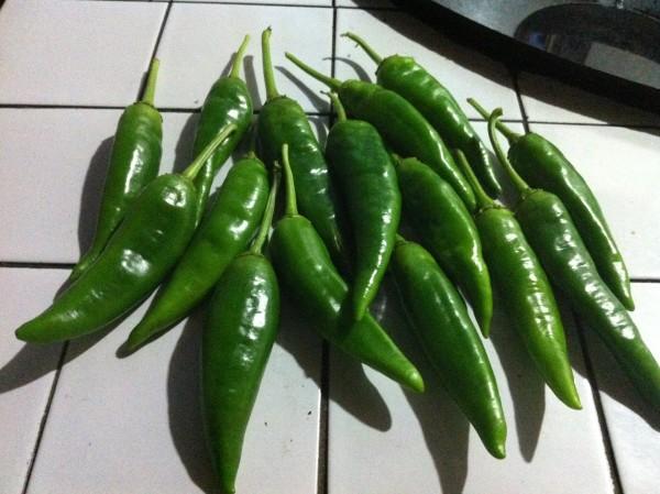 准备青椒,刚从辣椒树上摘下来的.