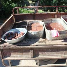 """新疆伊犁警方查处豆腐""""黑作坊""""的做法"""