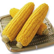 质检:百万吨进口美玉米含转基因