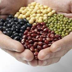 常食豆类可降低心脏病风险