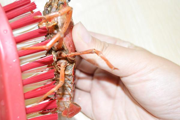 如何清洗修剪小龙虾?pj.jpg