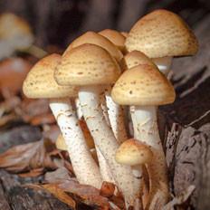 蘑菇的识别及养生烹饪方法