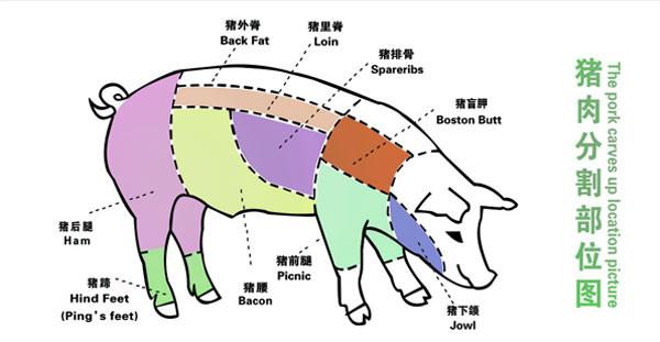 猪肉各个部位分布图