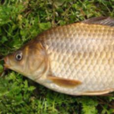 如何轻松完整的杀鱼?