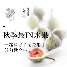 秋季最IN水果【无花果】大揭秘