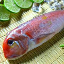 白方头鱼_【马头鱼】马头鱼的功效_马头鱼图片_食材百科_美食杰
