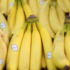 你总吃的那种香蕉可能会吃不到了