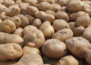 凉山马铃薯.jpg
