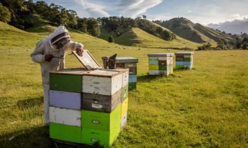 进口蜂蜜品牌康维他领跑双十一蜂蜜销量dQ.jpg
