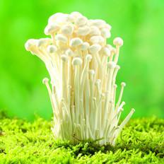 吃金针菇可降低胆固醇