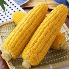 从分类到挑选,详尽的玉米集锦