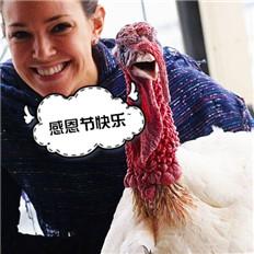 """感恩节,咱们聊聊""""火鸡""""这货"""